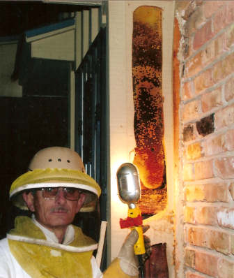 Night-time live bee removal